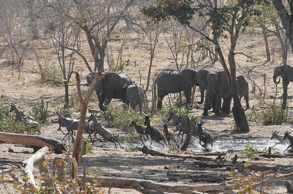 Grands Espaces - Éléphants