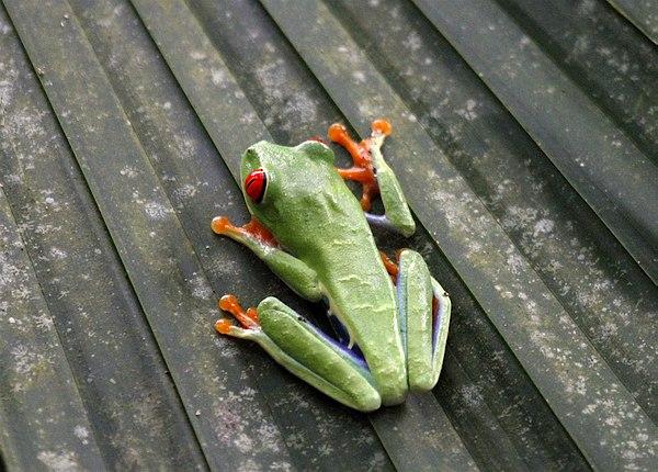 Grands Espaces - Costa Rica