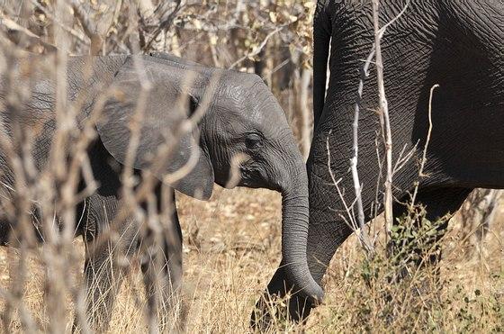 Grands Espaces - Zimbabwe