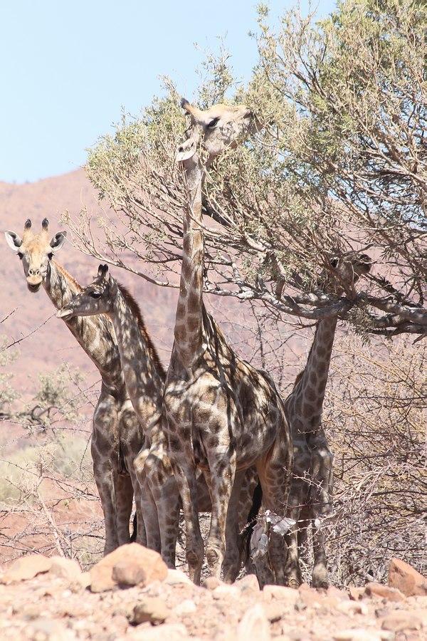 Grands Espaces - Namibie