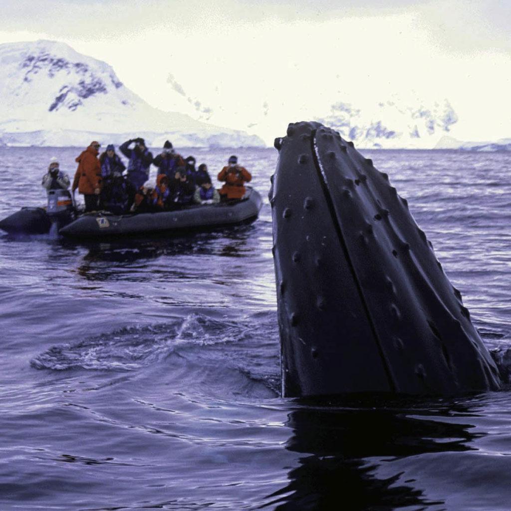 Croisière polaire antarctique