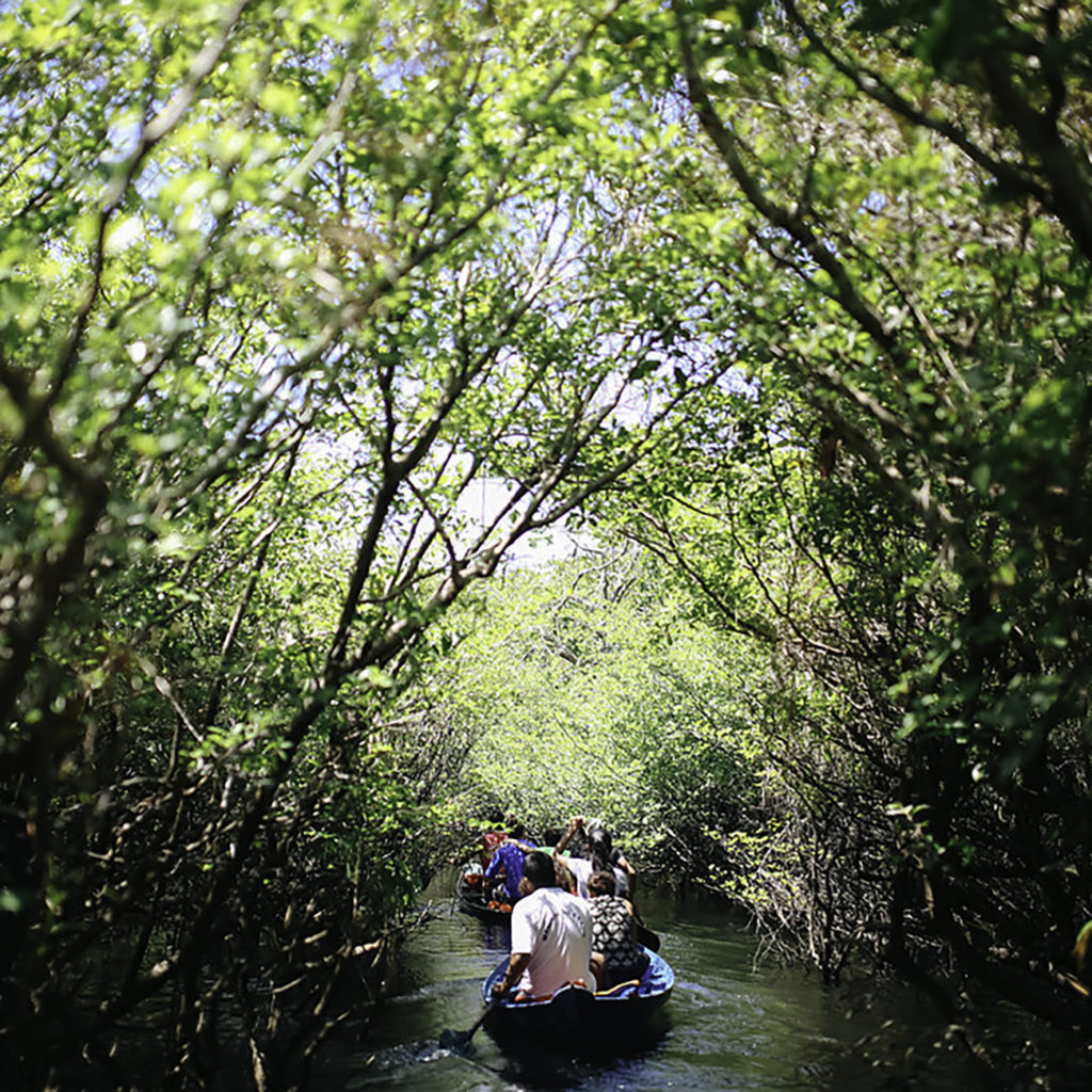 Voyage en Amazonie
