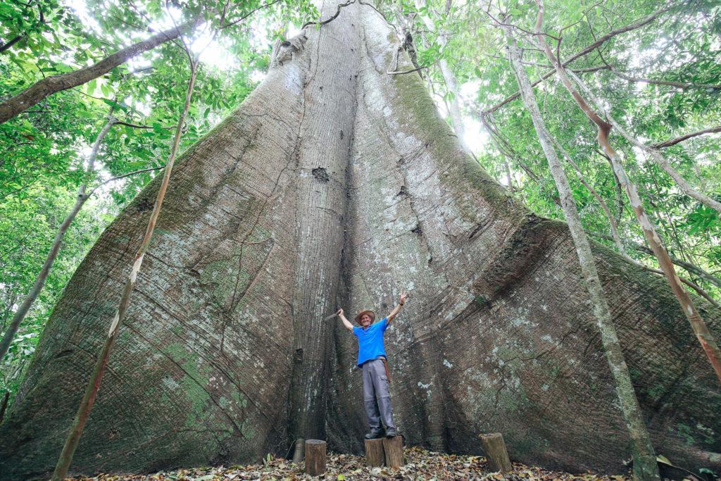 Arbre croisière Amazonie