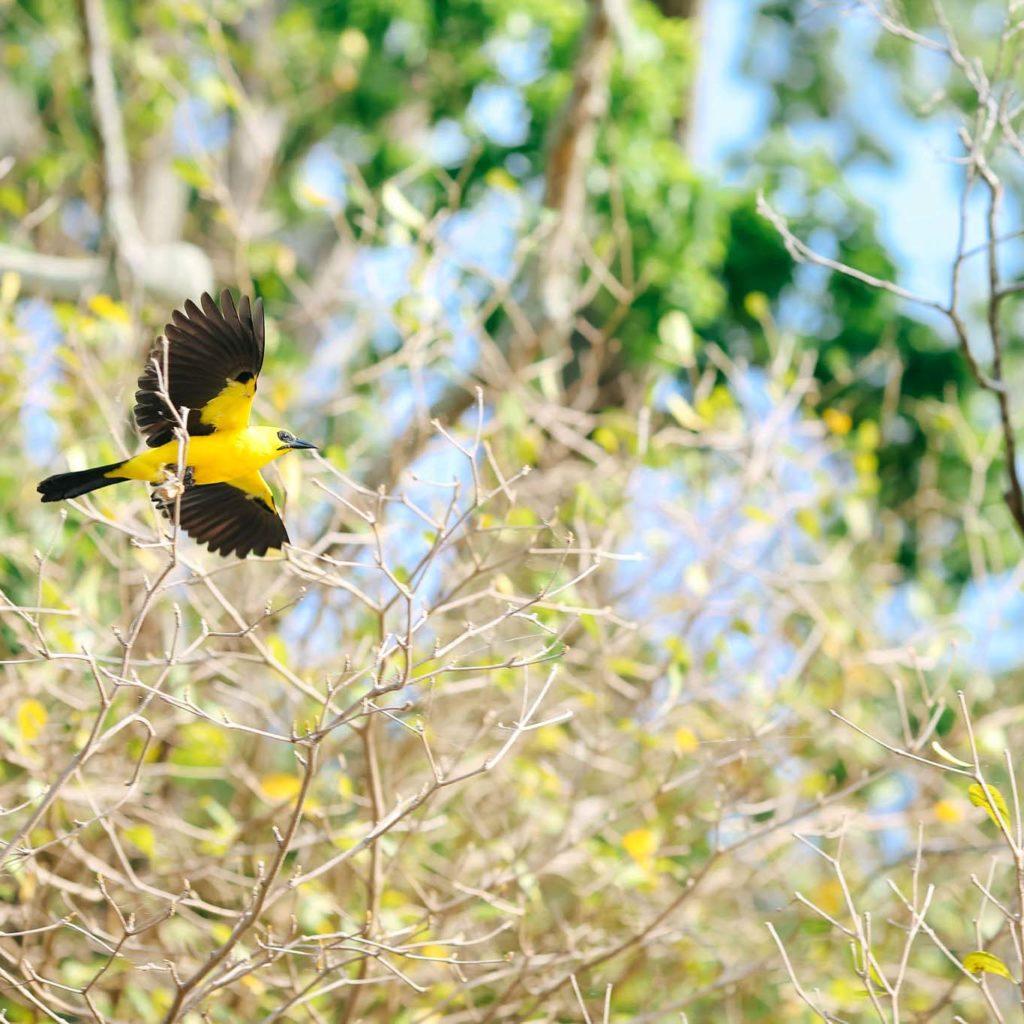 Oiseau Amazonie
