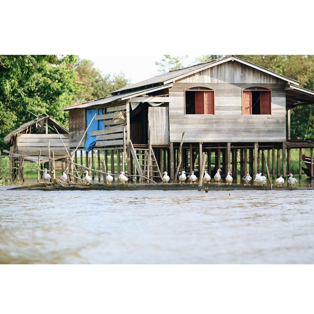 Croisière découverte Amazonie