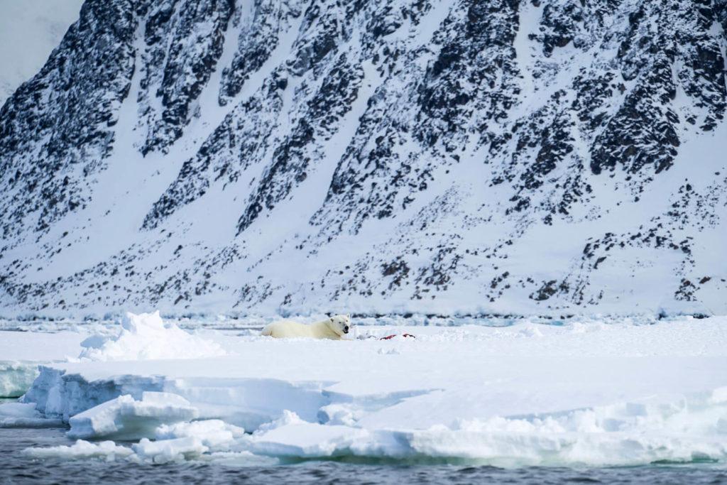 Croisere Polaire Spitzberg Polarfront Ours Polaire