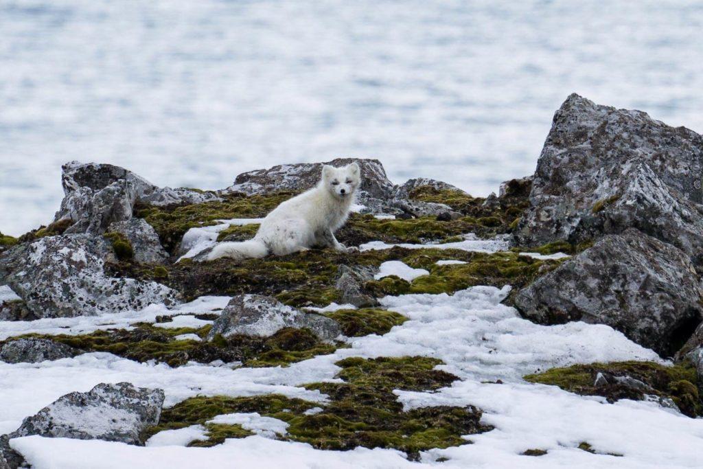 Croisière Polaire au Spitzberg à bord du Polarfront