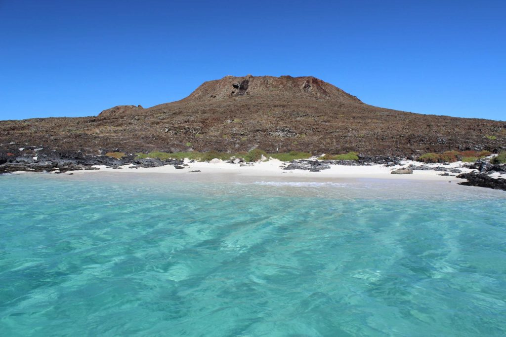 Galapagos Sombrero Chino