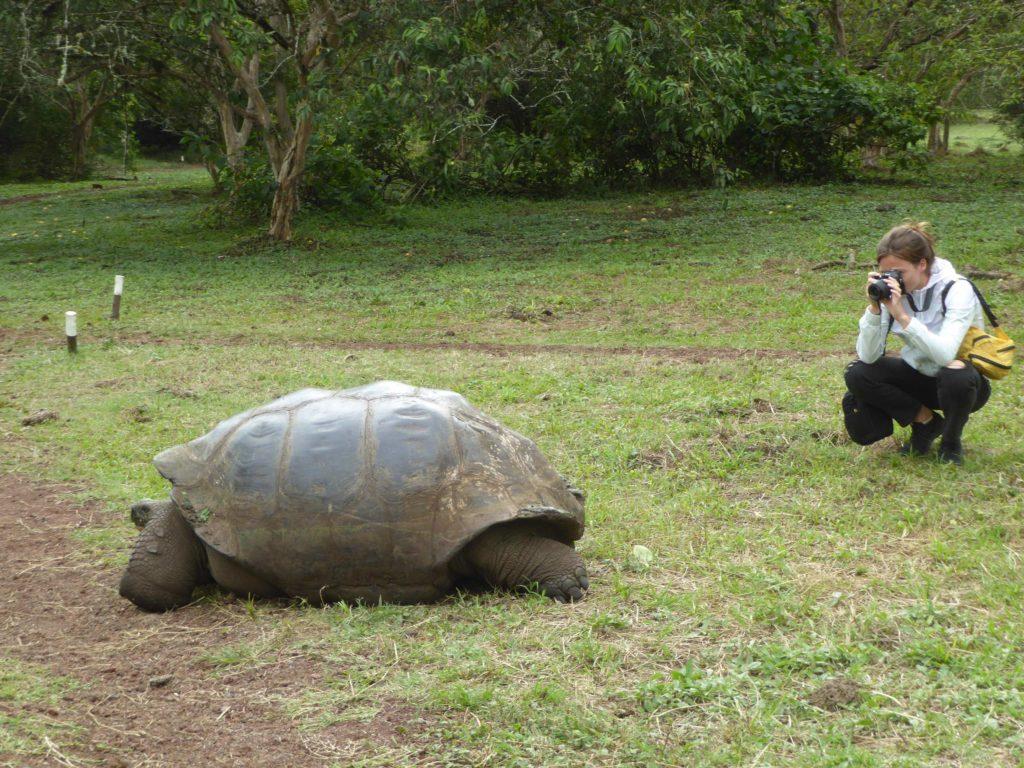 Galapagos Tortue El Chato