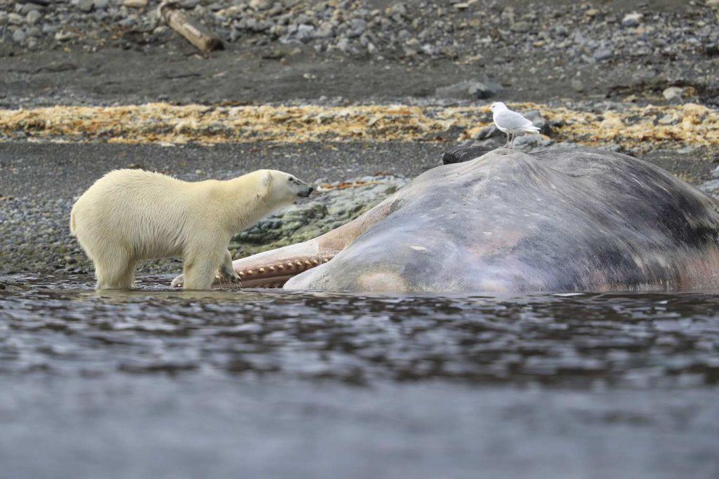 Croisière our polaires