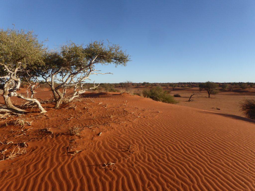 Circuit Kalahari