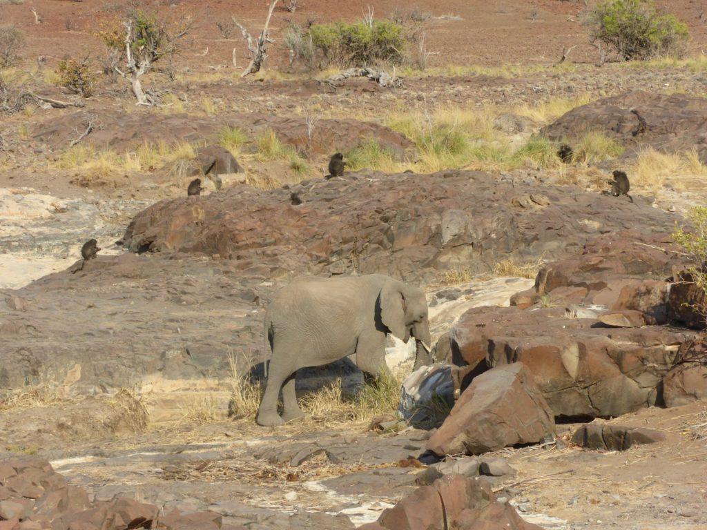 Circuit Namibie éléphant