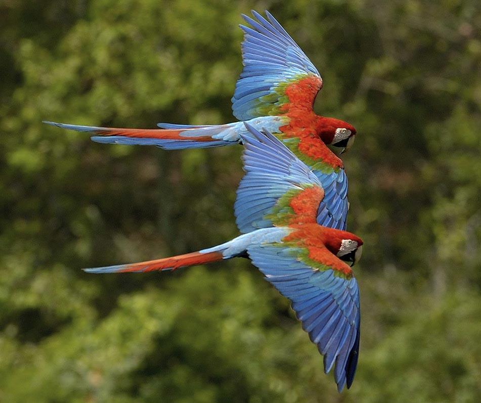 Découverte des perroquets à Manaus en Amazonie