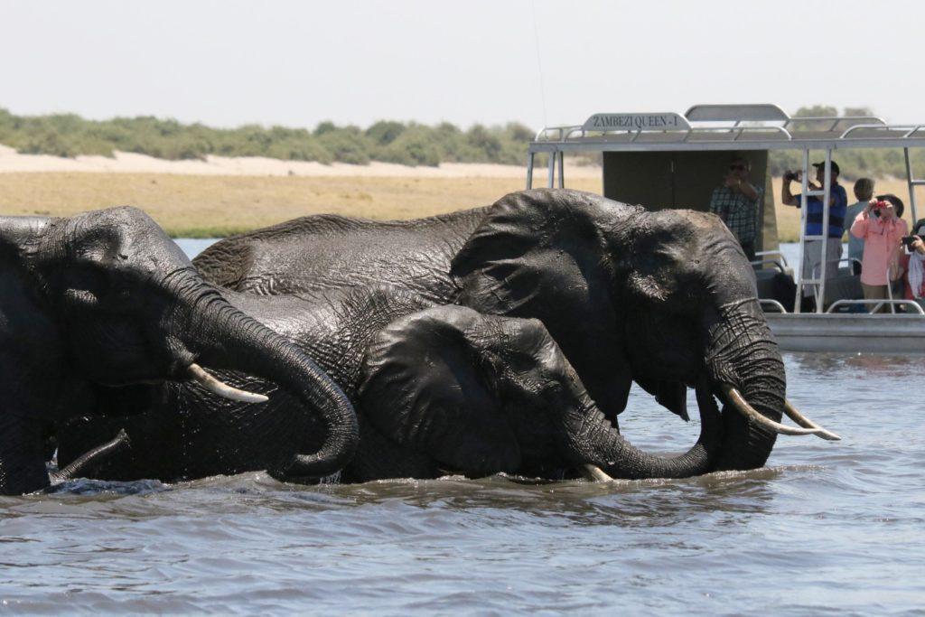 Croisière Safari Eléphants