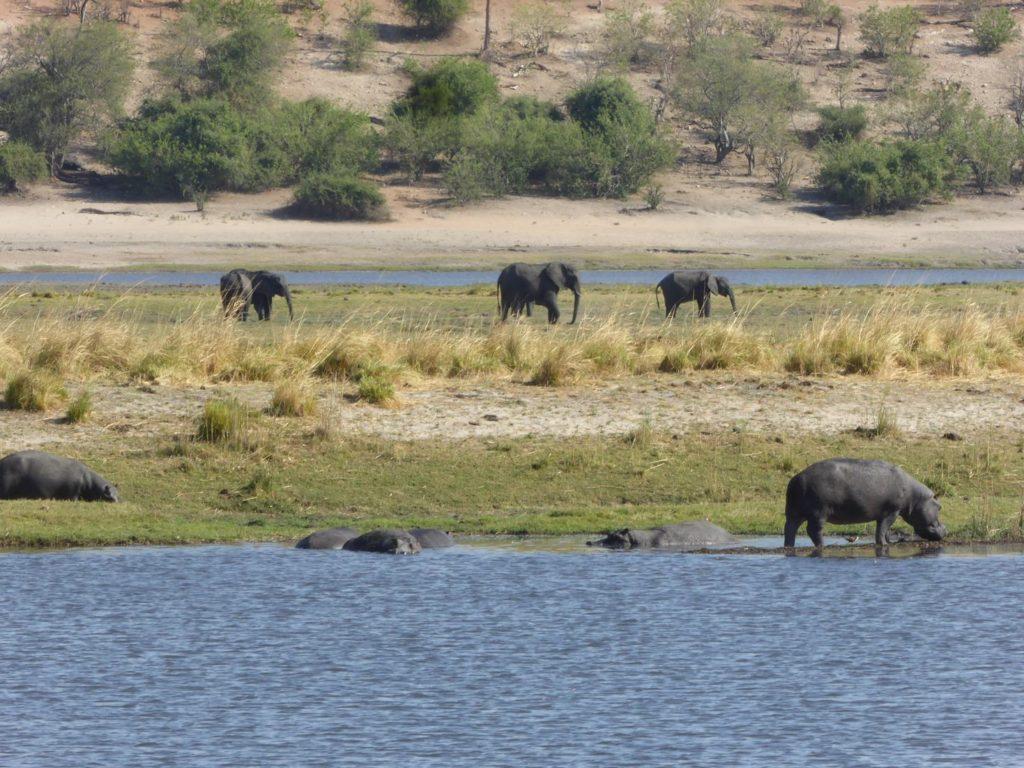 Coisière éléphants