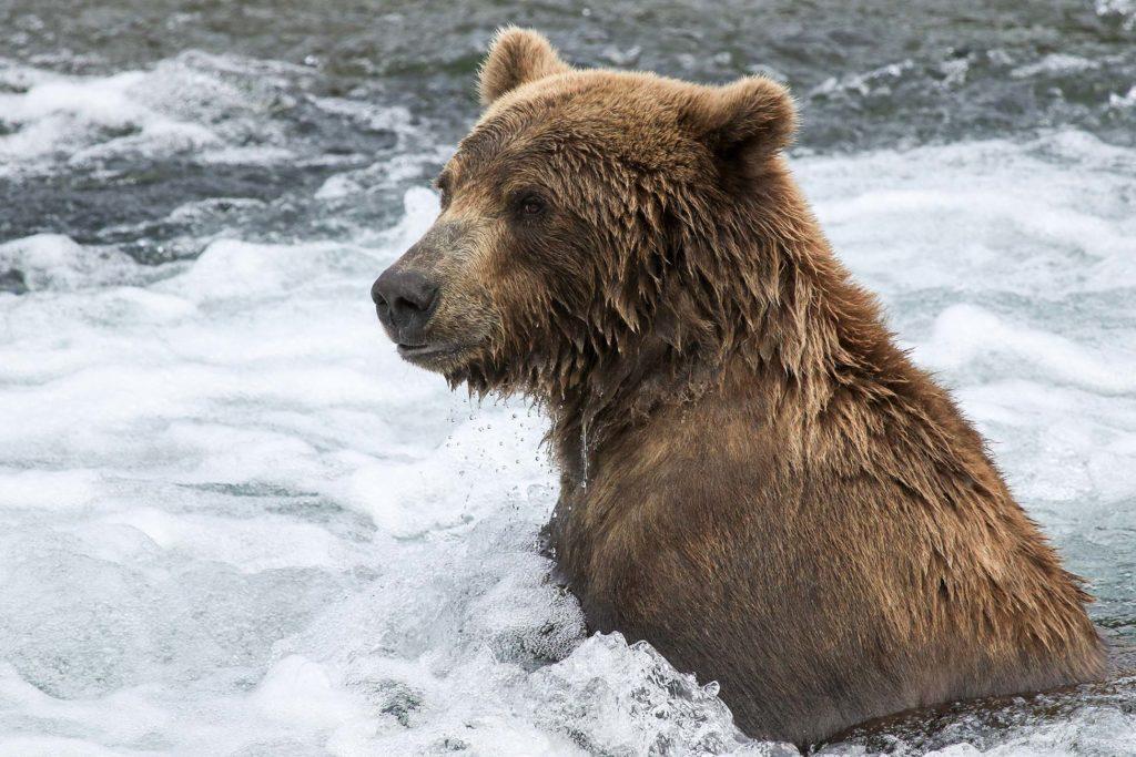 Observation des grizzlys en Alaska