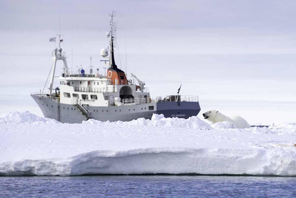 Polarfront Ours Polaire Spitzberg