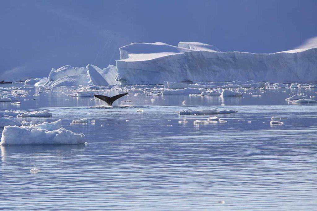 Exploration de l'Antarctique lors de nos croisières