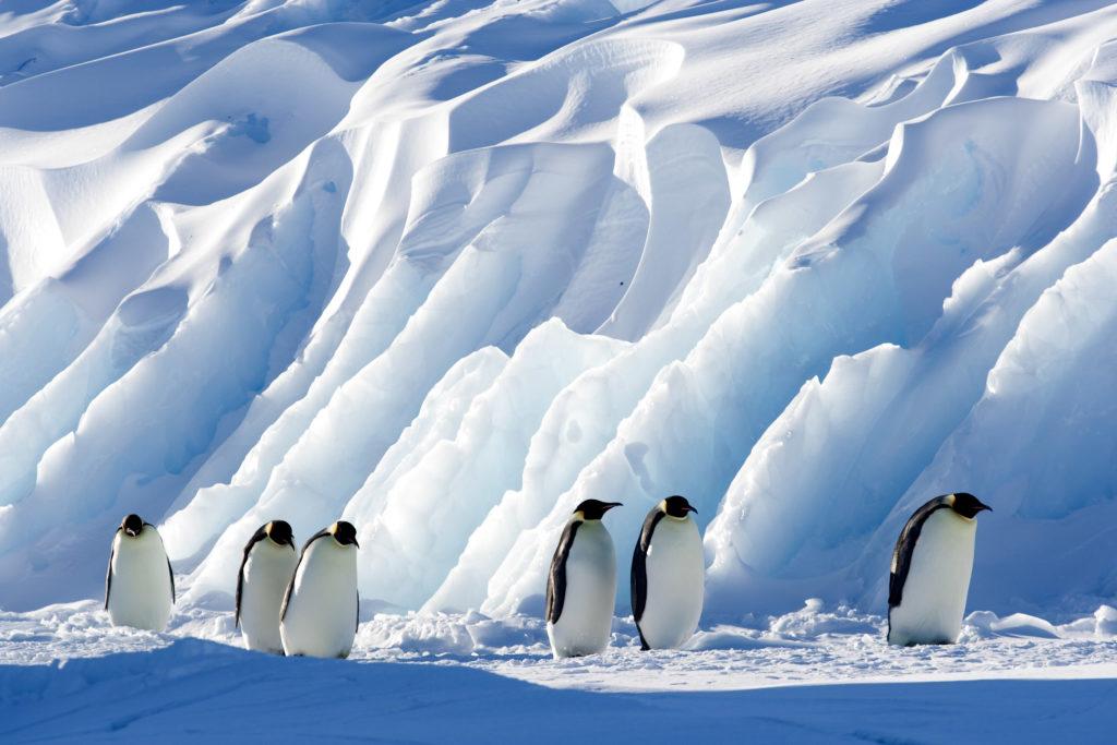 Observation des manchots en Antarctique