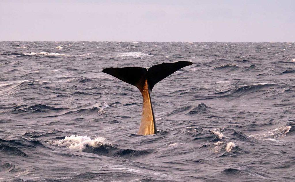 Baleine - Croisière en Laponie