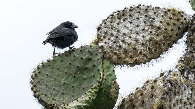 Découverte des pinsons dans Les îles Galapagos