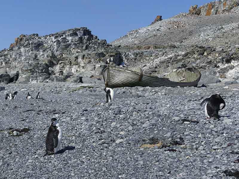Half Moon Island - croisière Antarctique