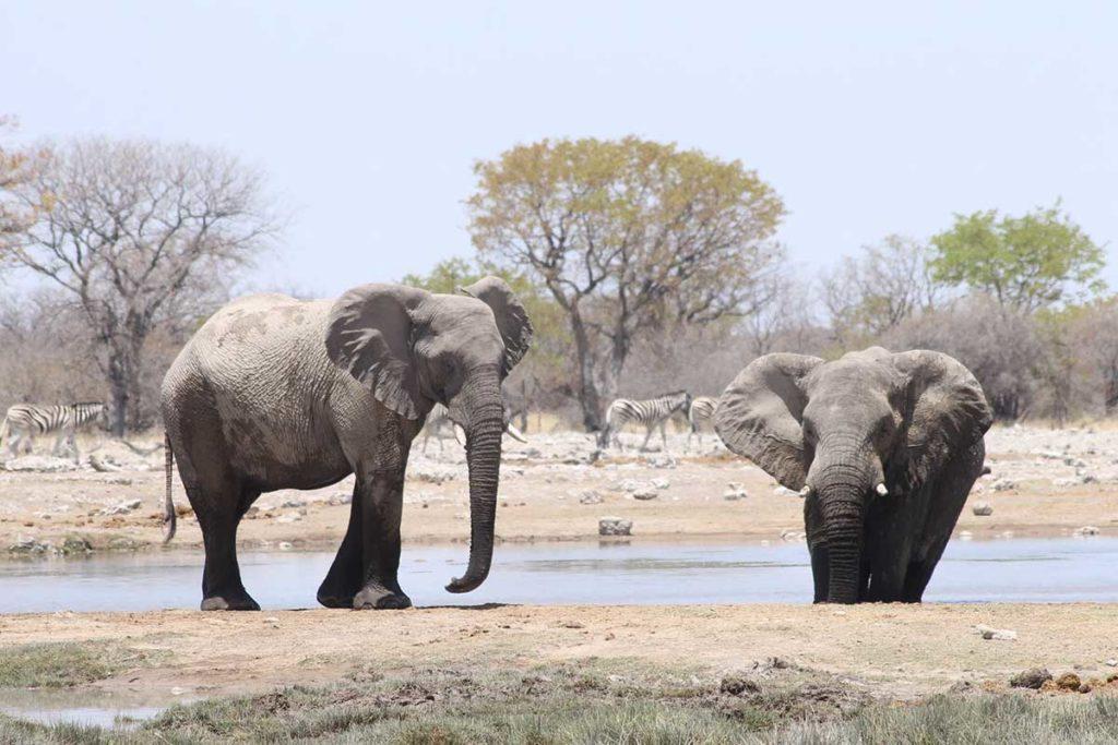 Éléphants - Circuit Ouganda