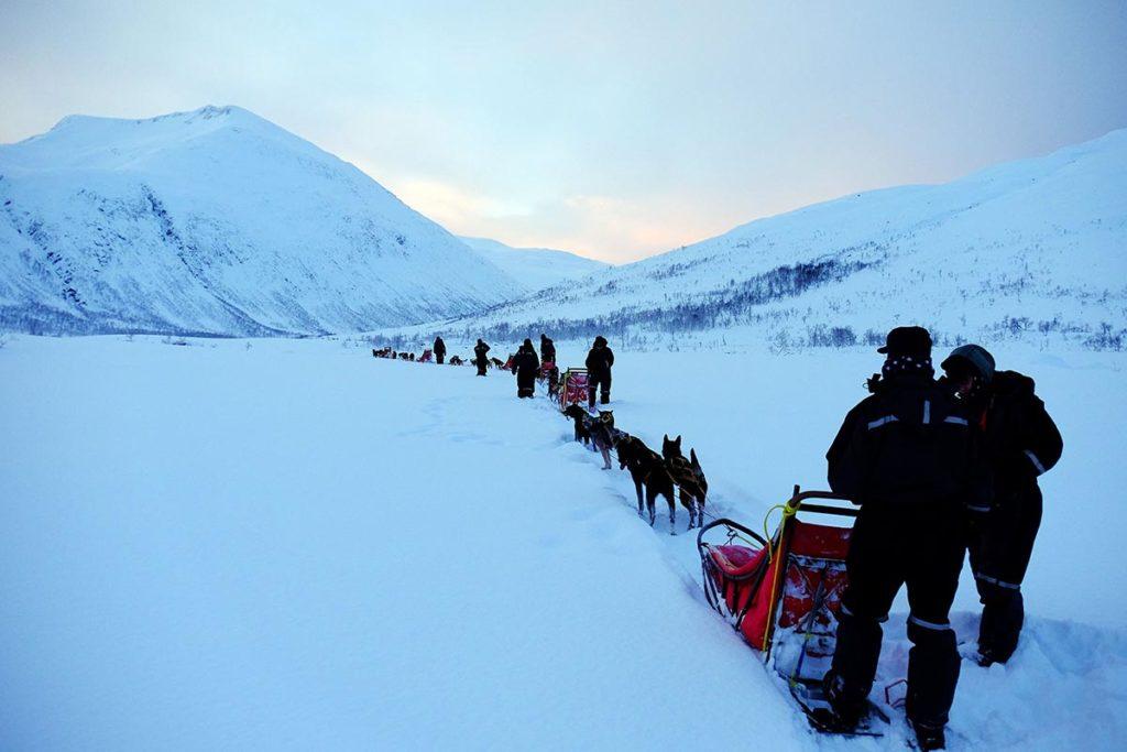Chiens de traîneaux - Croisière Laponie