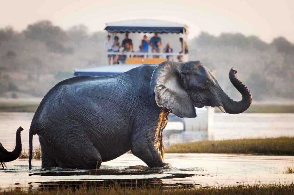Elephant Zambeze
