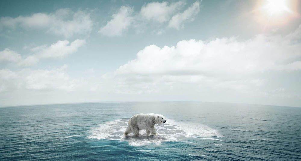 Symbole réchauffement climatique Ours Polaire