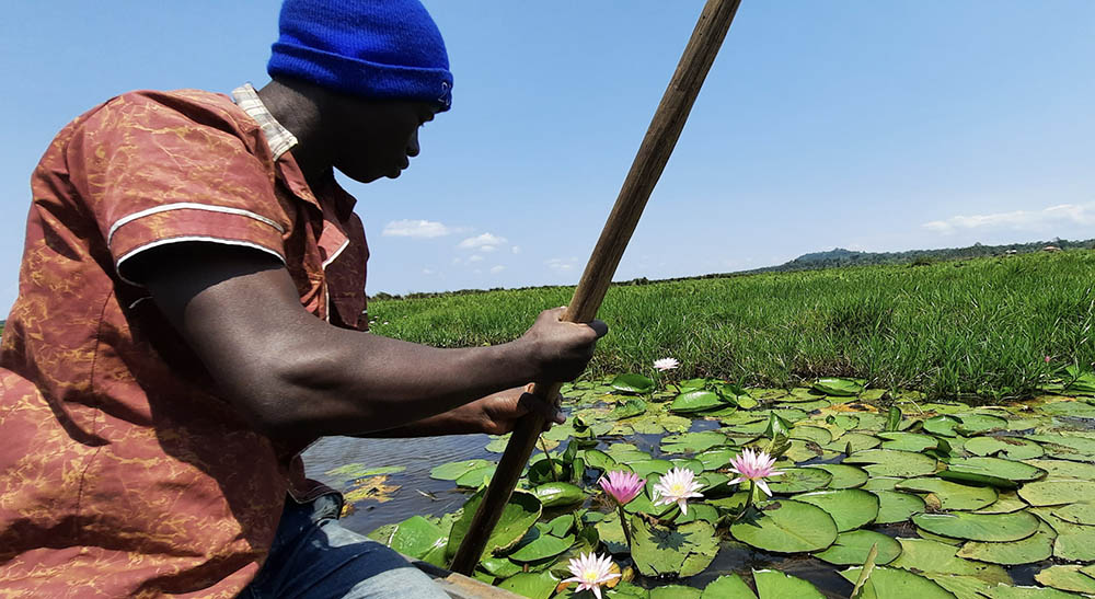 Nénuphars ouganda