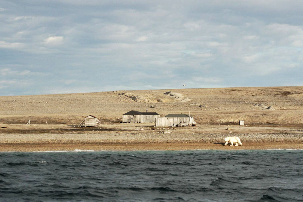 Kinnvika Murchisonfjorden Ours